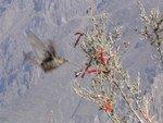 Sans doute un colibri